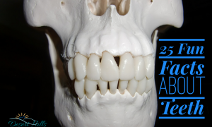 Fun Fact Friday: Your Amazing Teeth